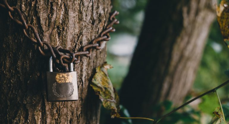 We lock arbre